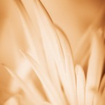 Gentle Flower - Close up of flower, art prints
